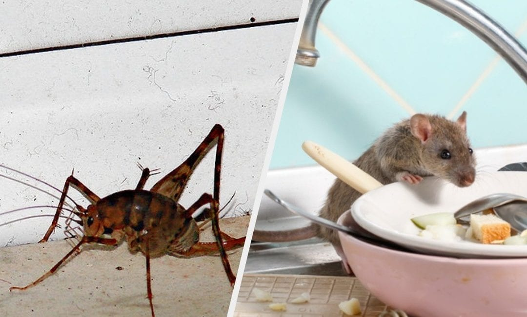 24 Horror Stories About Bugs And Other Vermin That Will Make You Shiver
