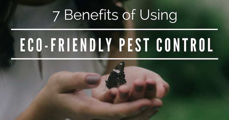 Eco-Friendly Pest Control Bradenton